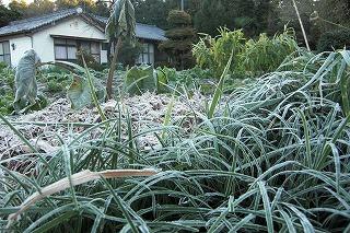 霜がおりた朝.jpg