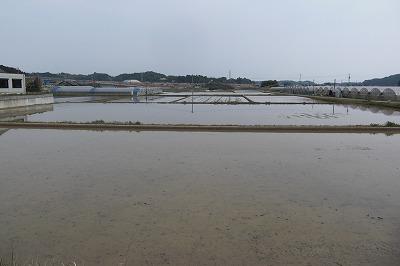 水が入った田んぼ.jpg