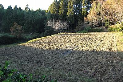 菜種を撒いた畑.jpg
