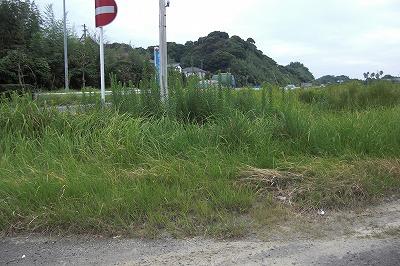 雑草が邪魔で車が見えない.jpg