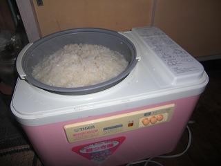 炊きあがった餅米.jpg