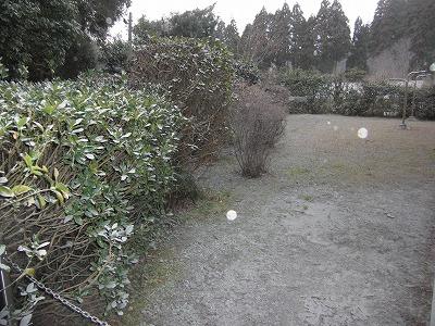 庭も.jpg