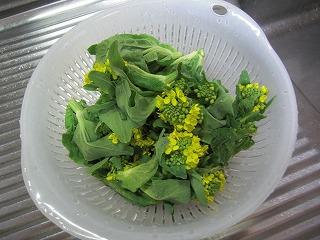 黄色い花のおひたし.jpg