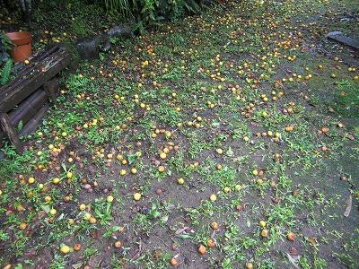 梅のじゅうたん.jpg
