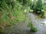 散乱する竹や枝や木の葉