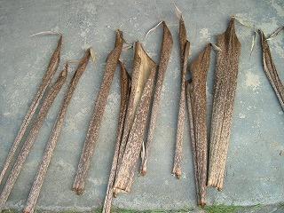 竹の皮.jpg