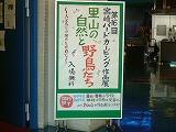 宮崎バードカービング展.jpg