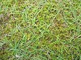 苔と芝生と雑草.jpg