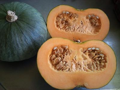 自生のかぼちゃ.jpg