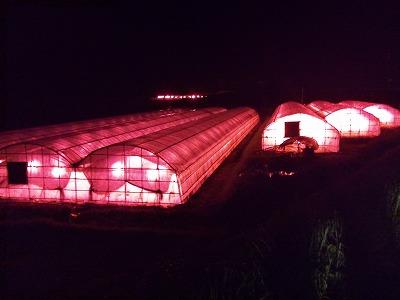 ハウスの赤い明り.jpg
