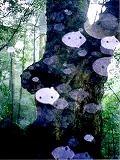 木の精霊.jpg