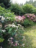 家の花.jpg